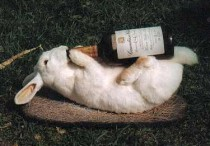 Drunk-rabbit