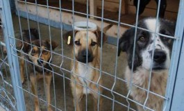 291 animale sterilizate în campania organizată la Mioveni - Argeş