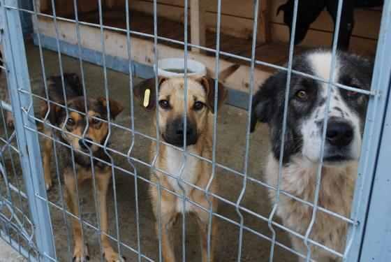 291 animale sterilizate în campania organizată la Mioveni – Argeş