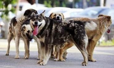 La Bǎbana, 640 de câini au fost microcipaţi gratuit