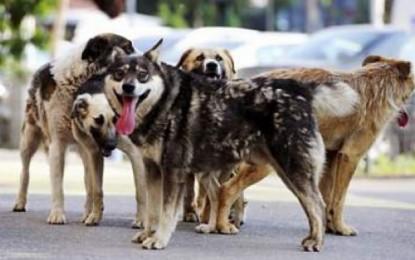 Ce risti daca ai un câine agresiv ! Cum si cand poti fi dat in judecata