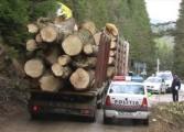 Zeci de mii de euro, masini si lemn au confiscat azi procurorii de la 'mafia padurilor' din zona Campulung