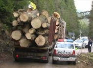 S-au intetit controalele - Politia la cei care exploateaza si vand lemne