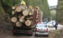 Un consilier local, pădurari şi un inginer, implicaţi în furtul de lemne - Ei ar fi accesat ilegal Radarul Pădurilor