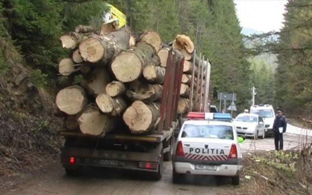 Un consilier local, pădurari şi un inginer, implicaţi în furtul de lemne – Ei ar fi accesat ilegal Radarul Pădurilor