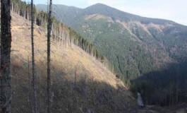 O nouă măsură împotriva furturilor din păduri – puncte fixe de control în localități din nordul județului
