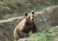 EXCLUSIV ! Barbat atacat de urs in curtea casei, in Arges  !
