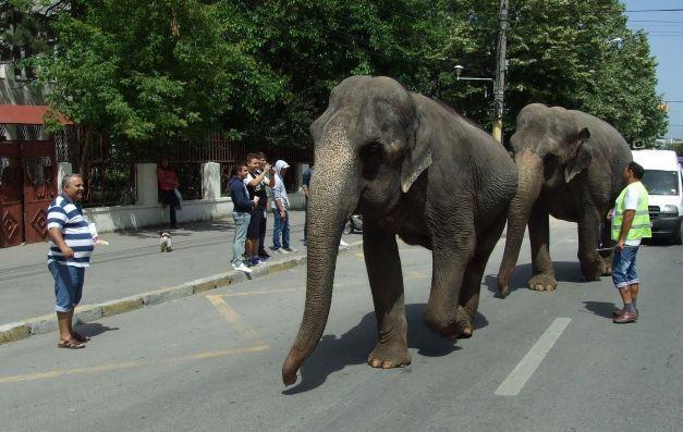 Defilare  cu elefanţi şi animale exotice pe bulevard