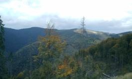"""Ocolul Silvic Aninoasa - """"campion"""" la acţiuni în instanţa de judecată pentru a proteja pădurea statului"""