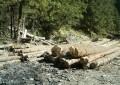 Ocolul Silvic Câmpulung a dat amenzi de 513.300 de lei la furtul de material lemnos