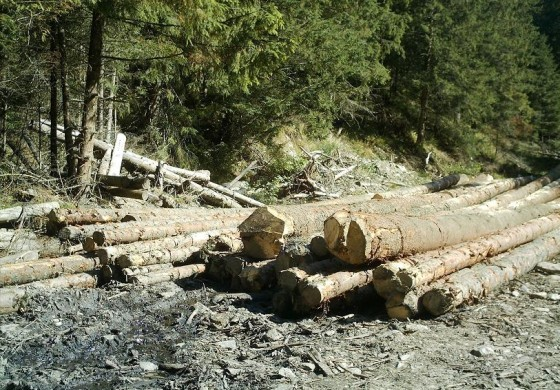 Dispar pădurile României? Ce ne spune Inventarul Forestier Național?