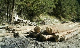 Exclusiv!  Pădurile retrocedate ilegal au fost rase de pe faţa pământului în timp ce statul le cerea înapoi