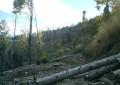 Exclusiv! Control de amploare în pădurile Obştii Moşnenilor Dragosloveni