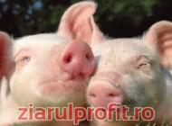 ,,Schimb porc cu iPhone 5''