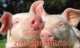 În Argeş, cei mai scumpi porci de Crăciun