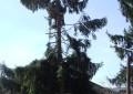 Brazi de sute de ani pusi la pământ – S-au tăiat arborii de la Biserica Olari