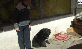 Inedit! Câinele legat de uşa magazinului, cel mai bun sistem de pază