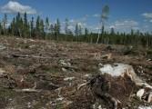 Cu Gardă Forestieră şi cu Radarul Pădurilor se fură tot mai mult din pădurile Argeşului