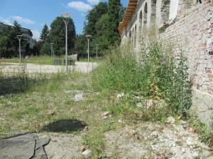 kretzulescu (1)