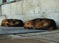 Domnule viceprimar, strângeţi şi câinii din parcarea Spitalului Judeţean de Urgenţă din Piteşti