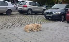 Câinii fără stăpân reapar pe străzile Piteştiului