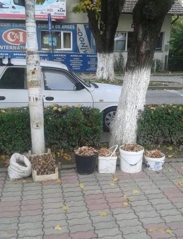 Atenție la consumul de ciuperci. Pericolele la care se expun cei care cumpără de pe stradă