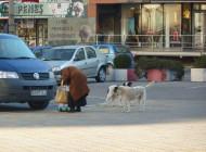 Fenomenul câinilor fără stăpân ia amploare la Piteşti. Au fost date şi primele amenzi pentru abandon