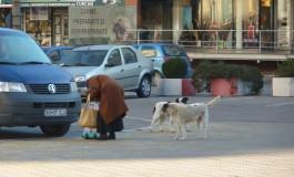 Câinii fără covrigi în coadă de la Prefectura Argeș