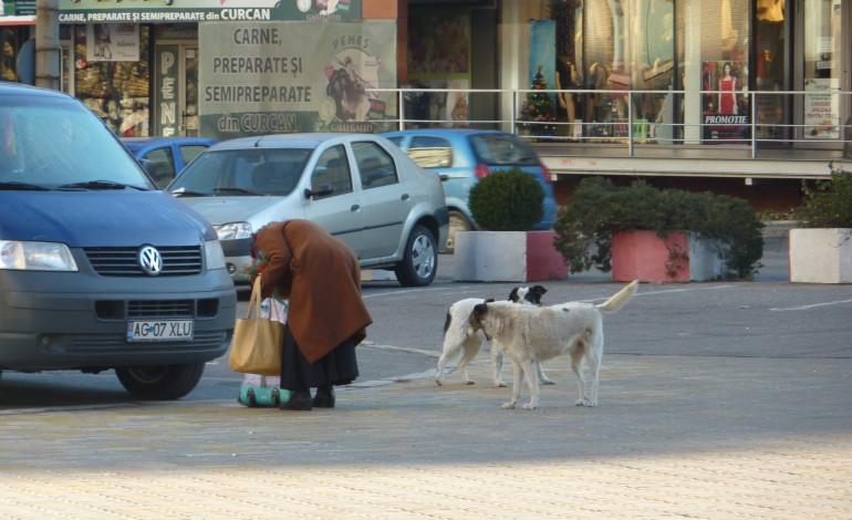 Câinii fără stăpân din Pitești atacă anagajații primăriei
