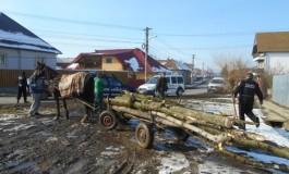 Pentru hoţii de lemne din Muscel, semne proaste ... anul are