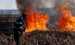 Zeci de animale au ars intr-un incendiu la Campulung