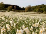 Politicienii social democraţi  ţin morţiş să distrugă ariile naturale  protejate