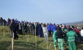 Dacă se vrea, se poate- 6 000 de puieţi de salcâm au fost plantaţi la Mioveni