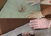Ou de barză clocit de o curcă - jurnalist TV pe post de baby-sitter la puiul de barză