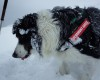 Dara, câinele salvator de la Salvamont Argeş, a plecat la studii