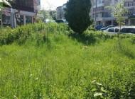 EXCLUSIV  - Argeşenii se plâng de neglijarea spaţiilor verzi dar nu cunosc legea