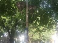 Sârbul Jankovic sponsorizeazǎ primǎria – Se pun flori în stâlpii de pe Bulevard
