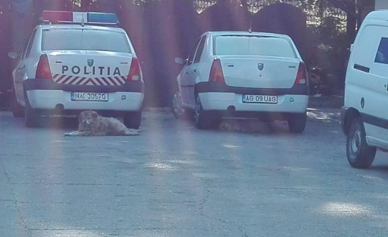 Masinile Politiei la restaurant in timpul servicului