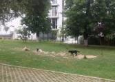 600 de câini au fost prinsi de hingherii din Curtea de Argeş – Acţiunea se reia în august