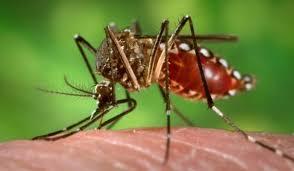 Alerta! Creste numarul romanilor infectati cu Zika