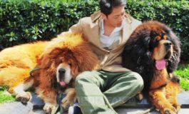 De ce animalele pot reprezenta o adevărată terapie pentru oameni