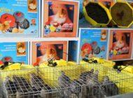 O noua reuşită ! Arabii cumpără incubatoare produse în Argeş