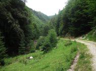 Remarcare de trasee turistice -Cea mai amplǎ acţiune din ţarǎ se organizeazǎ la Dâmbovicioara