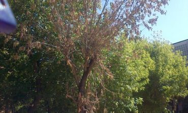 Sute de argeşeni vor sǎ li se taie copacii din faţa blocurilor
