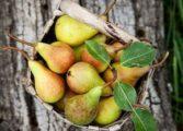 Pere, fructe-minune recomandate în diabet. Vezi şi alte beneficii