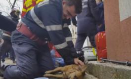 Pentru gestul sau inegalabil, pompierul erou Mugurel Costache propuscetăţean de onoare al Piteştiului