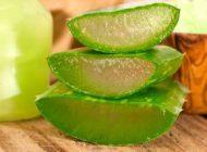 Aloe vera – potenţial tratament pentru diabet?