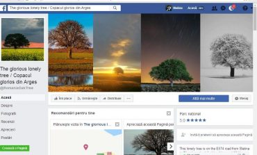 GALERIE FOTO! In ARGES - Singurul copac din lume cu pagina de Facebook