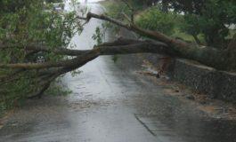 FURTUNA PUTERNICA in zona Muscel - Au zburat acoperișuri, au căzut copaci