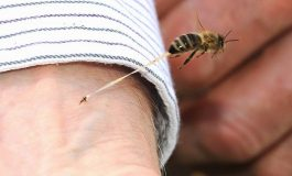 ACUM, Argesean muscat de insecta - E in stare grava